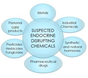 The-Thinking-Womans-Guide-to-Breast-Cancer-endocrine-disruptors
